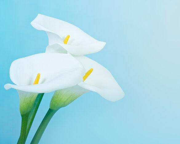 Fleurs pour le Fête des Mères
