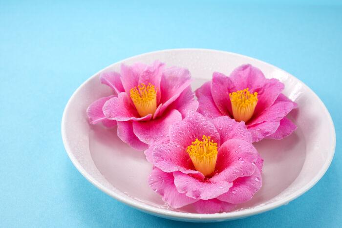 Camélia - Signification Des Fleurs
