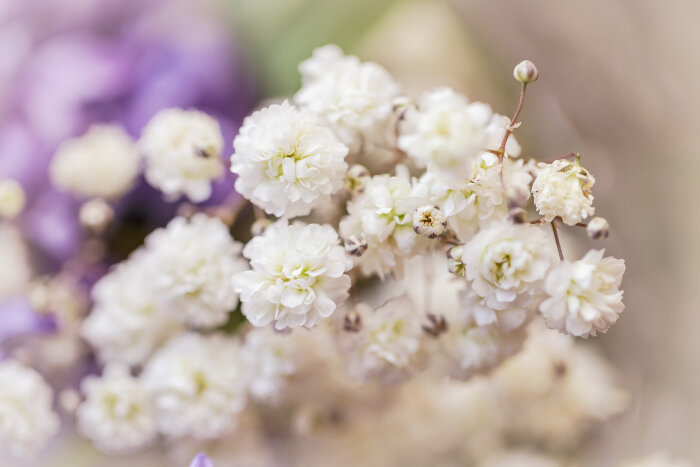 fleurs blanches - signification des fleurs