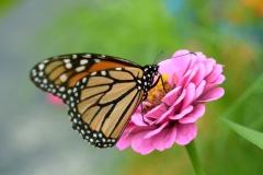 Fleurs de l'Amitie