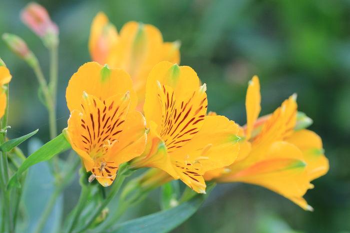 Fleurs Jaunes Signification Des Fleurs