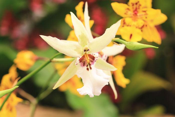 orchid e signification des fleurs. Black Bedroom Furniture Sets. Home Design Ideas