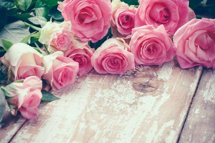 Rose signification des fleurs - Signification rose rose ...