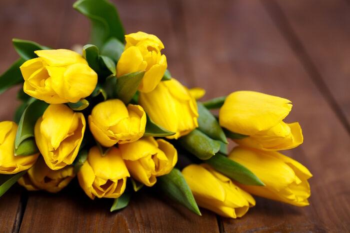 Tulipe Des Signification Tulipe Tulipe Fleurs Signification Des Fleurs Des Signification Fleurs Tulipe WED2beH9IY